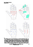 Zones in the hands palm reading